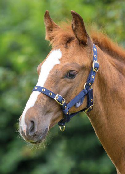 Shires Nylon Foal Headcollar - Navy