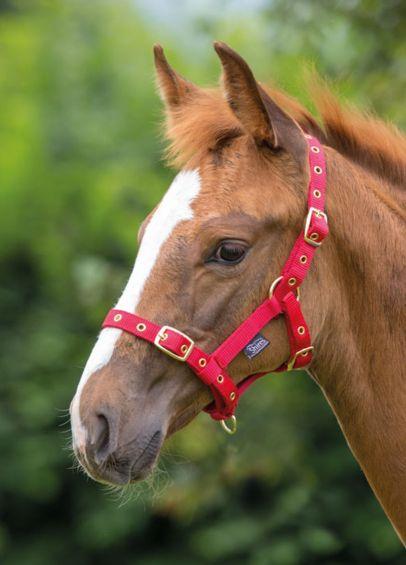 Shires Nylon Foal Headcollar - Red