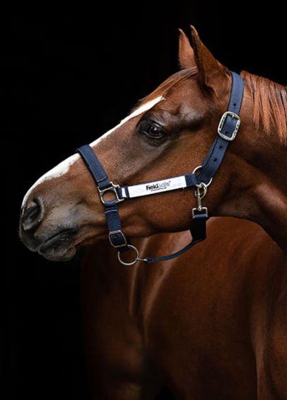 Horseware Fieldsafe Headcollar - Navy