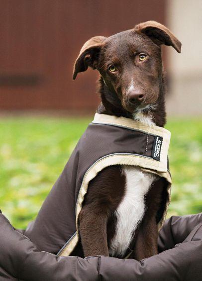 Rambo Waterproof Dog Rug - Brown/Cream