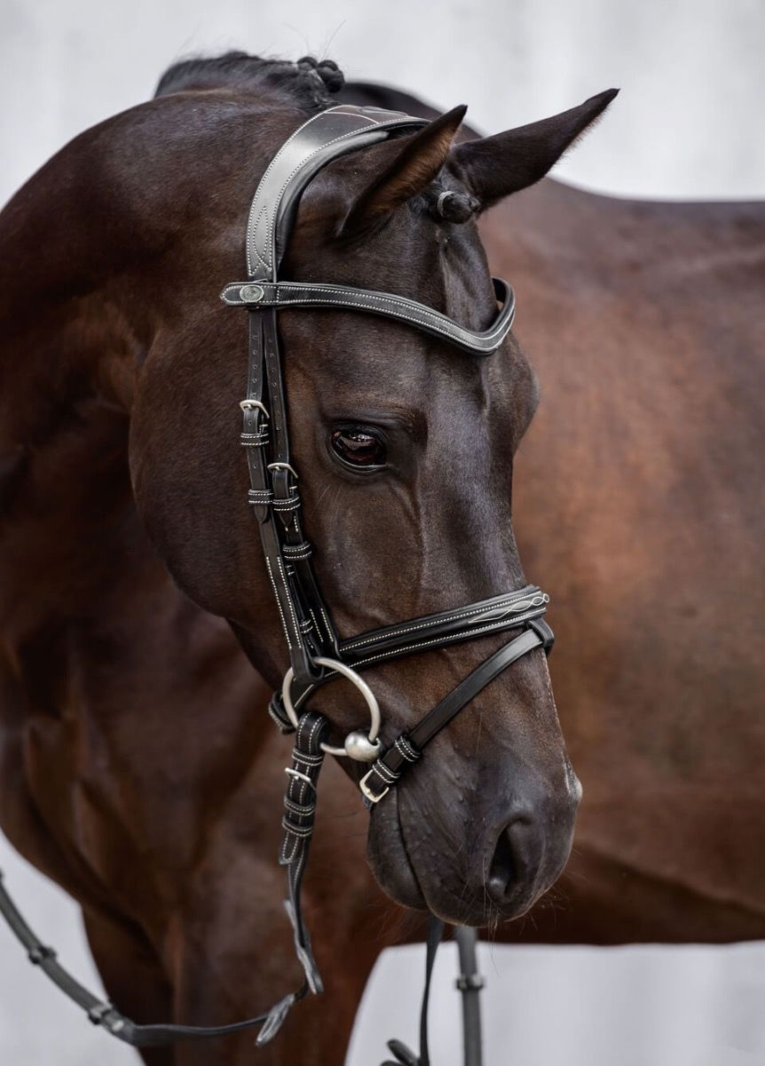 Swedish noseband Leather Brown Paint Black Details about  /Buses Bridle Luxury New-  show original title