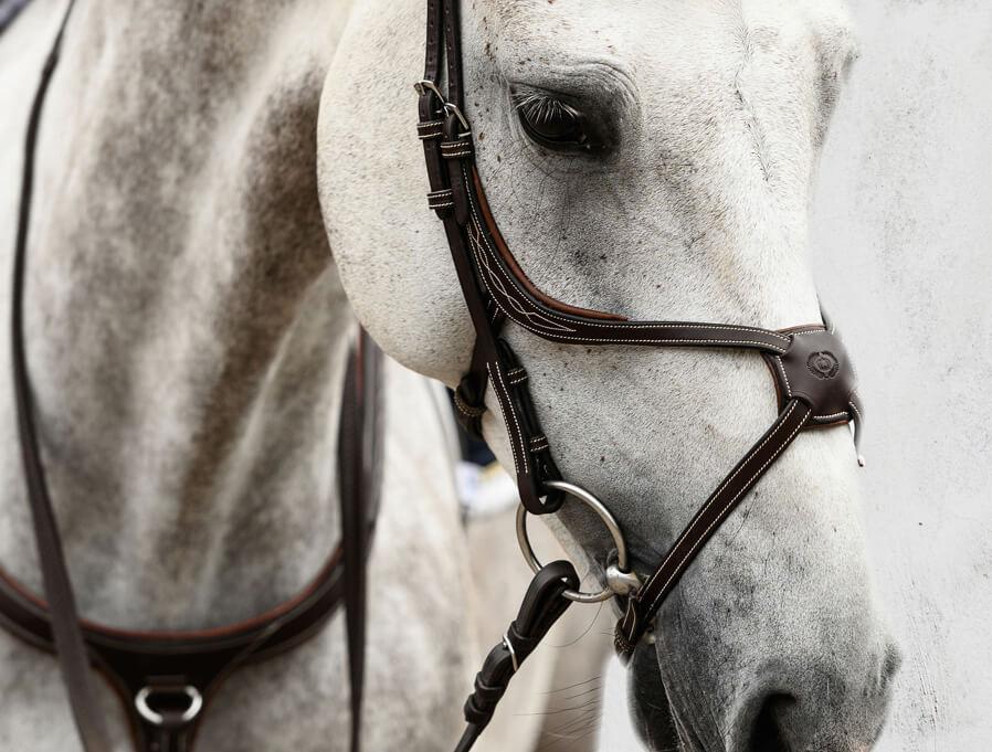 Saddlery Bridlework